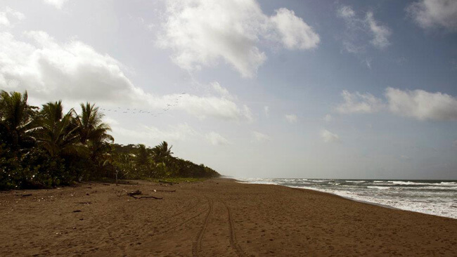tortuguero-beach.jpg