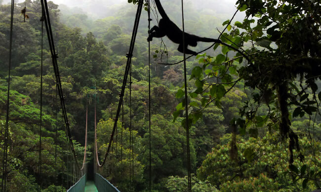 monteverde-cloudforest-tour.JPG