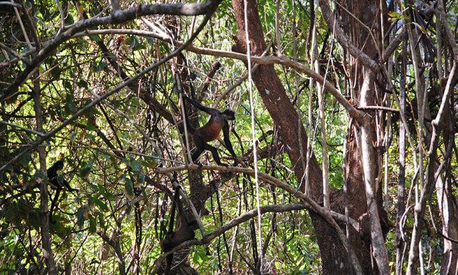 squrriel-monkey-taking-the-high-road.jpg