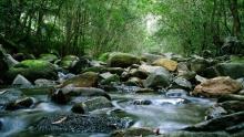 Rainforest Weather