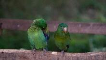 Parrots & Parakeets