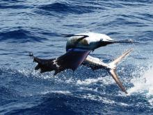 Manuel Antonio Fishing Experience
