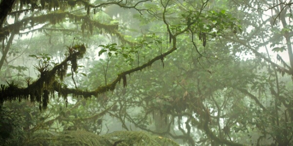 Cloud Forest Weather