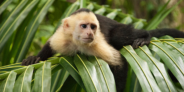 Manuel Antonio National Park Guided Tour
