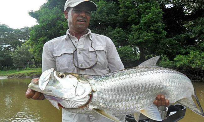 Freshwater fishing costa rica enjoy the best for Cisco s sportfishing fish count
