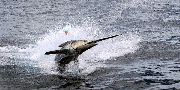 Fly Fish Costa Rica