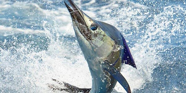 Ultimate Fishing Highlights of Costa Rica