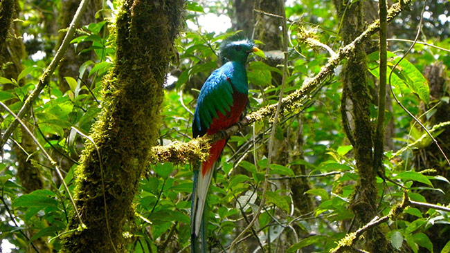 Guide To Monteverde Cloud Forest Reserve In Costa Rica