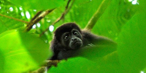 Costa Rica in 14 Days