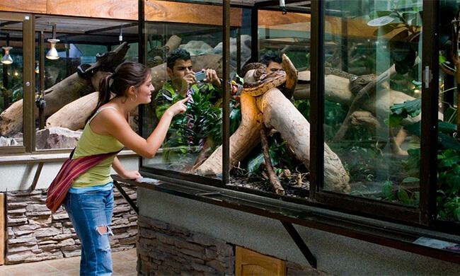Cape May Hotels >> Costa Rica Snake Tour - Serpentarium Visit