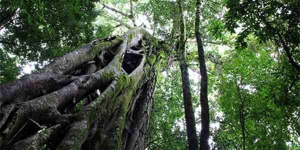Childrens Eternal Rainforest