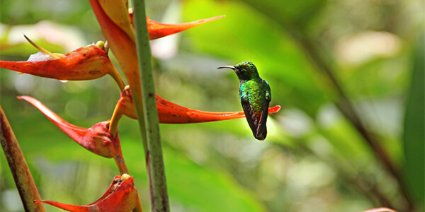 Cloud Forest Bird Watching – Villa Blanca