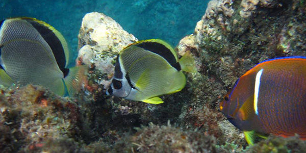 Caño Island Snorkeling from Uvita